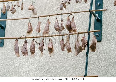 Butterfly Cocoons Displayed At Butterfly House At Mainau Island. Germany