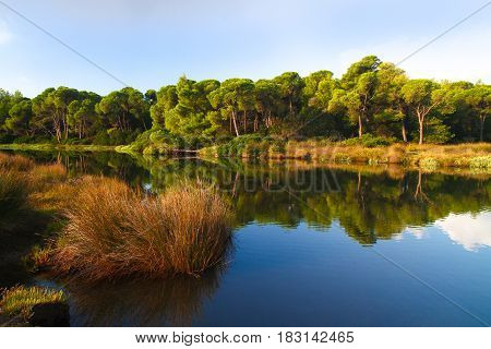 Famous Koukounaries lake and pine forests in skiathos island