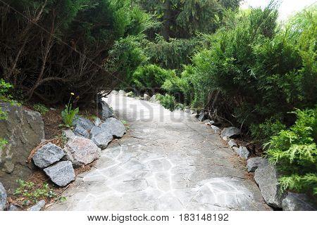 Beautiful landscape design, south resort park. Garden path in stone tiles, evergreen bushes, fir trees and shrubs in sunlight. Modern landscaping.