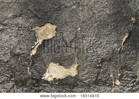 Wall With A Shelled Coating Of Pitch
