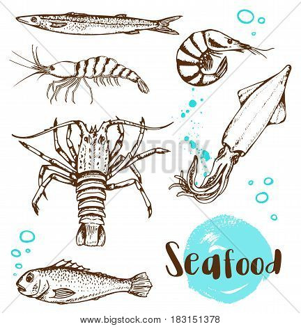 Set of vector vintage hand drawn fish squid and shrimp on a white background.