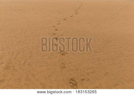 Foot step on sand beach