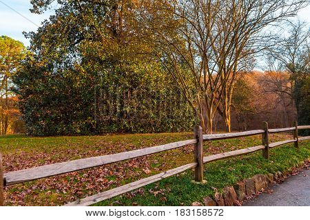 The wooden fence and the big magnolia tree in the Lullwater Park Atlanta USA