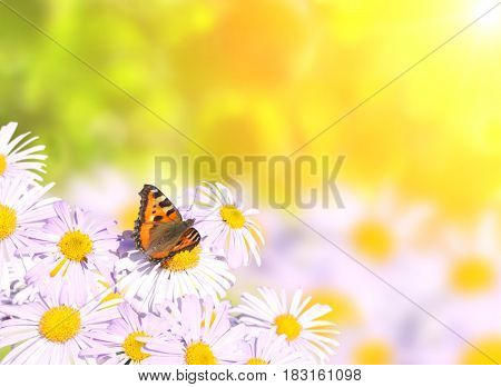 Butterfly on flowers on sunny background of yellow color
