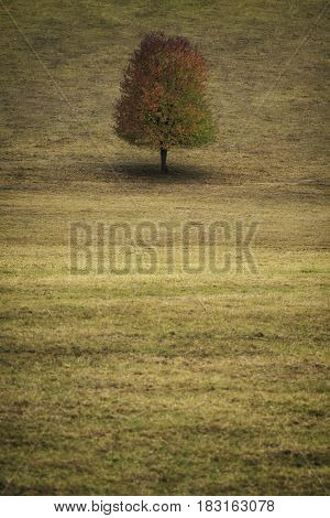 Lonely autumn tree on hill at morning.