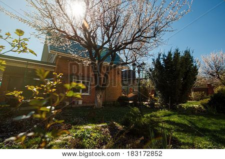 Backyard garden with green spaces, plants, flowers and trees in spring.