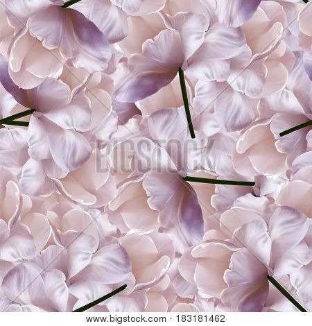 Seamless infinite lbackground flora. White-purple flowers. For design and printing. Background of natural tulips.