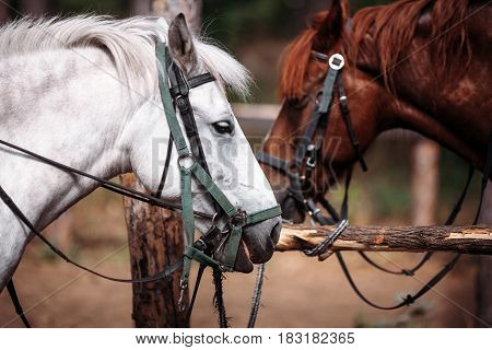 two big horses standing face to face