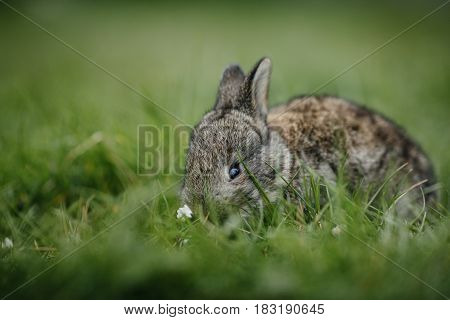 Close Up In Top View Of Young Cute Rabbit's Face