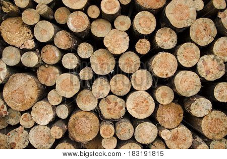 A close-up view of a texture of cut wood stacks stacked on a pile