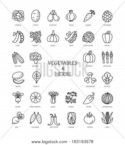 Vector line icons with vegetables and herbs. Healthy lifestyle. Vegetarian food. Different kinds of veggies.