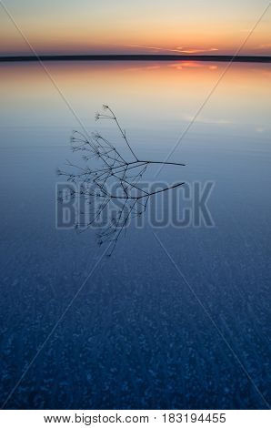 Sunset on the salt lake of Elton. Calm water and a branch of a plant in the foreground. Volgograd Region Russia. Vertical shot.