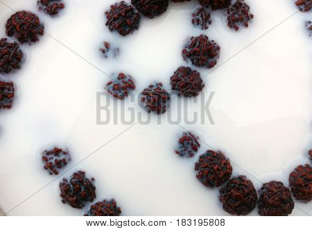 Rudraksha seeds in milk. Ritual ablution of the beads