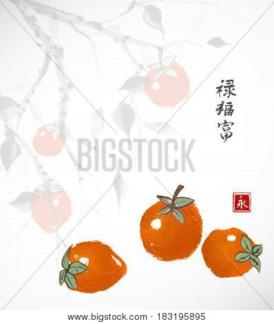 Three date-plum fruits with date-plum tree on background. Traditional oriental ink painting sumi-e, u-sin, go-hua. Three date-plum fruits on white background. Traditional oriental ink painting sumi-e, u-sin, go-hua. ontains hieroglyph - happiness, wealth,