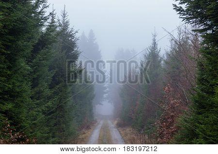 Mysterious destination beyond the mist on a dirt road