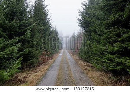 Misty scene and fir-trees on this dirt road