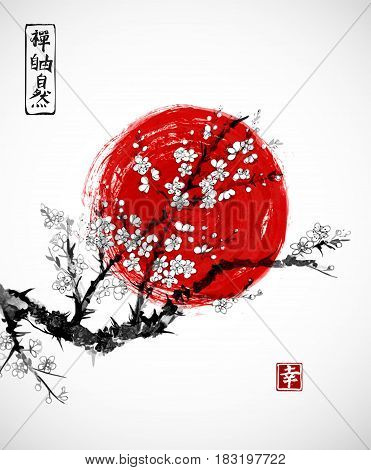 Sakura in blossom and red sun, symbol of Japan on white background. Contains hieroglyphs - zen, freedom, nature, happiness. Traditional Japanese ink painting sumi-e.