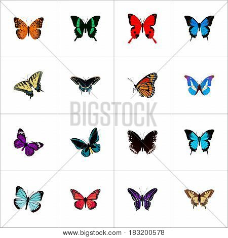 Realistic Sangaris, Common Blue, Milkweed And Other Vector Elements. Set Of Butterfly Realistic Symbols Also Includes Fly, Butterfly, Purple Objects.