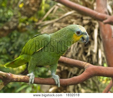 Green parrot perched on a branch amidst lush greenery poster