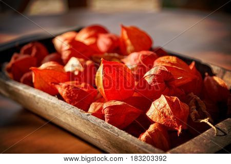 Still Life Of Fizalis Fruits