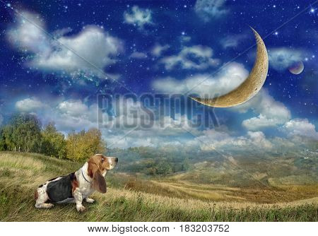 The Basset Hound Dog Looks At The Big Moon