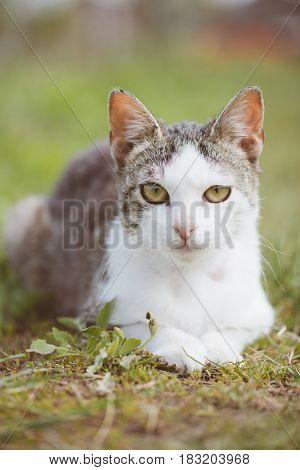Cute young cat in garden