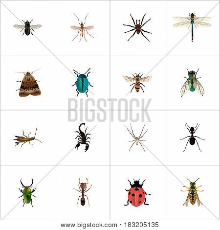 Realistic Arachnid, Ladybird, Bee And Other Vector Elements. Set Of Animal Realistic Symbols Also Includes Dragonfly, Insect, Arachnid Objects.