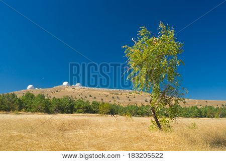 Autumnal landscape with lonely birch from Ai-Petri mountain tableland in Crimea Ukraine.