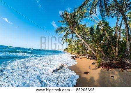 Palm trees on the wild beach
