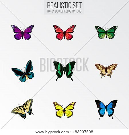 Realistic Beauty Fly, Azure Peacock, Archippus And Other Vector Elements. Set Of Beauty Realistic Symbols Also Includes Sky, Monarch, Blue Objects.