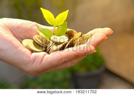 Saving money concept and hand holding money coin with tree growing for business