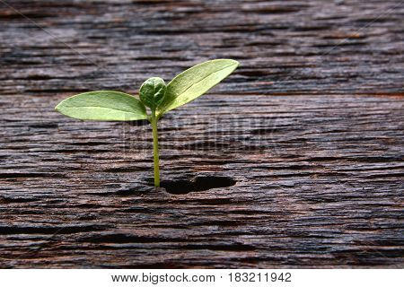 little green tree growing on the wooden background