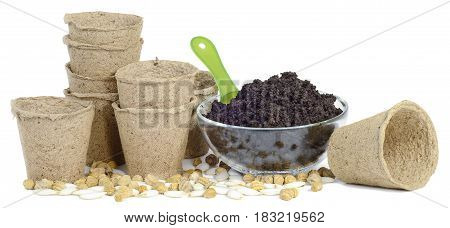 a bunch of pitchers cups of peat earth humus in a glass bowl a green plastic scoop seeds of nasturtium pumpkin and zucchini isolated on white background