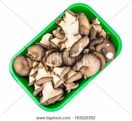 Bunch of fresh Oyster mushrooms. Studio Photo