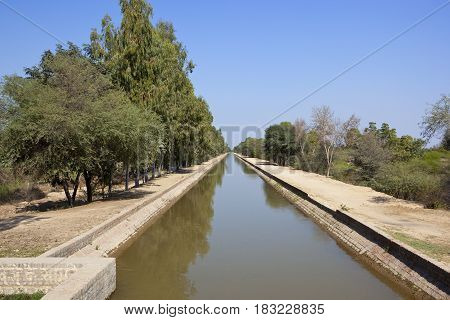 Rajasthan Canal With Eucalyptus Trees