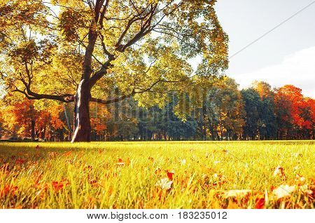 Autumn picturesque park - sunny autumn trees lit by sunlight, autumn nature in sunshine. Nice autumn park view. Sunny autumn landscape of autumn park with golden trees in vintage tones. Autumn nature background
