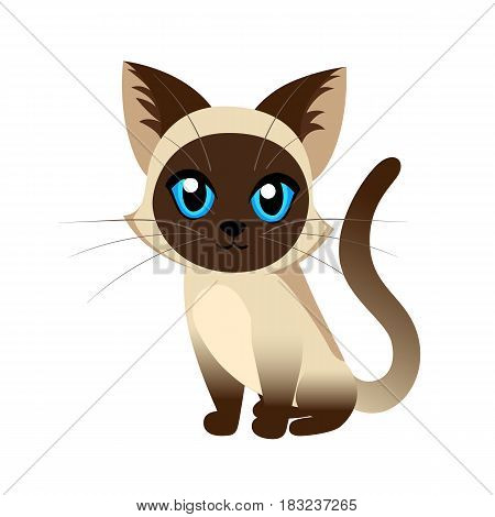 Siamese Cat The Lovely Kitten With Blue Eyes Fluffy On A White Background Spotty A Pet Cat Breeds Cu