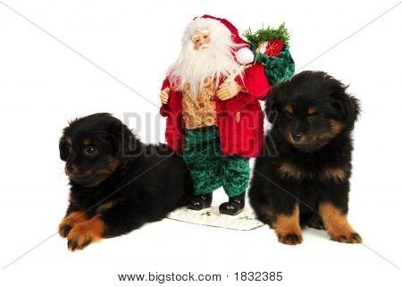 Twin Yorkipoo Puppies with Santa Clause one can't keep its eyes open. A Yorkshire/Poodle cross breed these 2 month old pups each weigh 2 lbs. poster