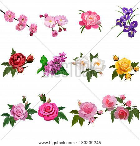 Very high quality original trendy realistic vector set with flowers rose bush or bouquet of roses, plum flower and lilac flower. Spring or summer design