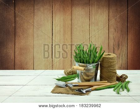 Green peas in buckets and garden tools. The concept of a healthy diet. Composition on a wooden background. Horticulture. Hobby. Rural work.