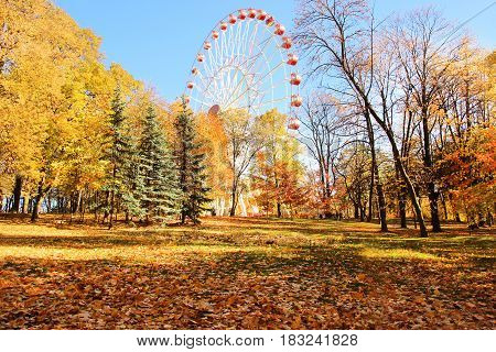 A colorful ferris wheel in amusement park. Autumn park.