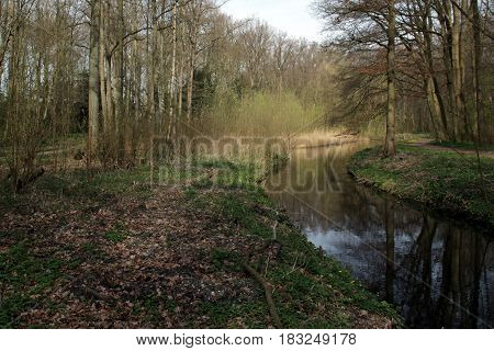 A Walk In The Amsterdam Forest