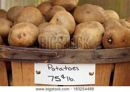 Russet potatoes in a bushel basket for sale