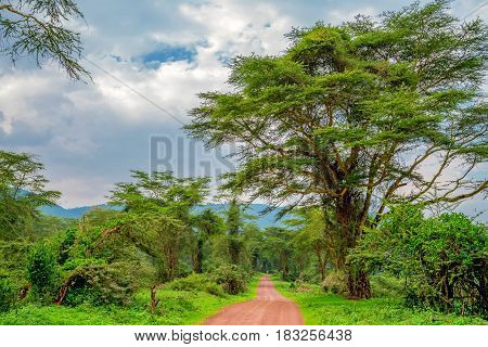 Mountain african forest with acacia and lush bushes in Ngorongoro national park, Tanzania