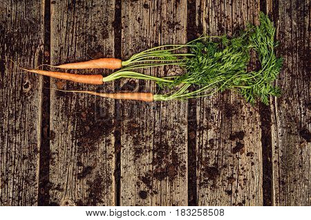 Raw, natural food background. Vegetables, carrot top view on old wooden desk background. Photograph taken from above, with dirt, soil, vintage planks. Vintage gardening concept with copy space