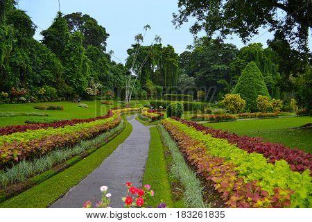 Alley in the Royal Botanic Gardens, Kandy. Sri Lanka