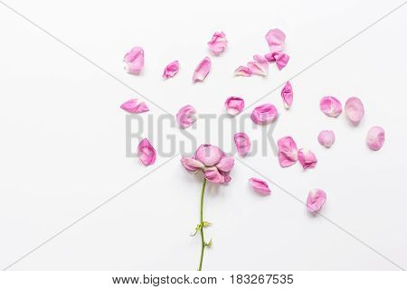 trendy woman desk in pastel colors with rose petals and plate on white background top view mock-up