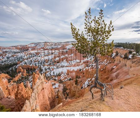 Visible Erosion Around Tree in Bryce Canyon
