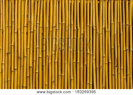 bamboo fence wall texture background Indian cane