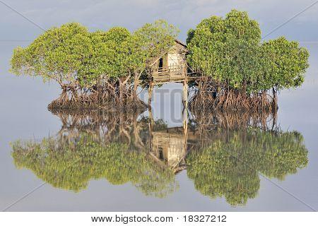 Fisherman's hut among mangroves